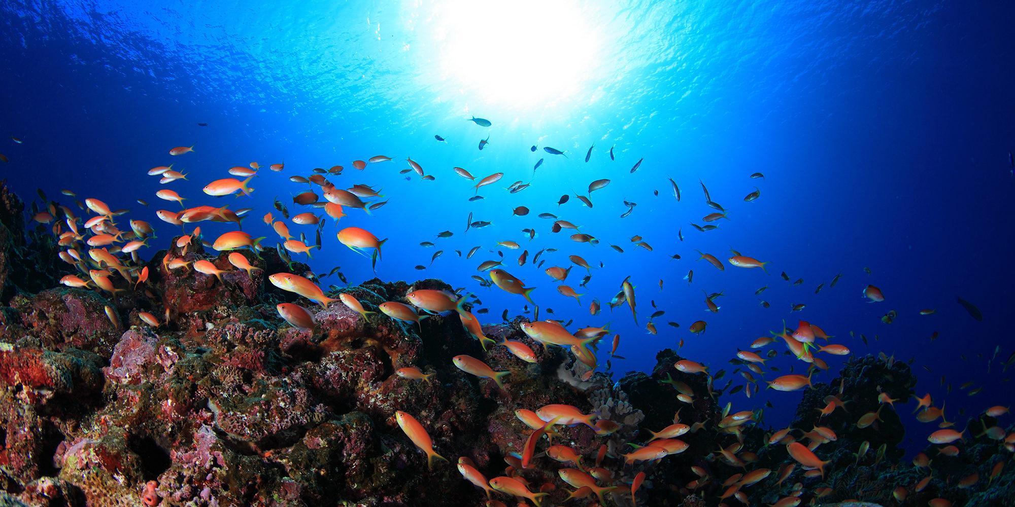沖縄でファンダイビング-沖縄でライセンス取得するならダイビングショップサニーデイズ